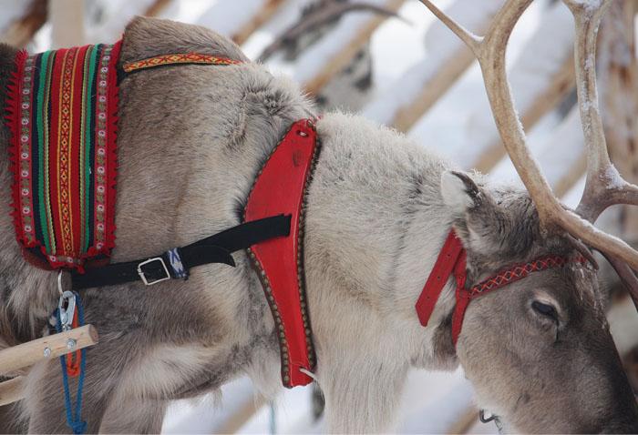 L'origine dei maglioni di Natale
